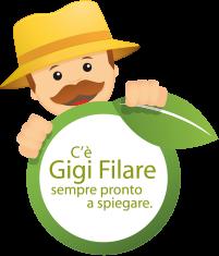 Gigi filare
