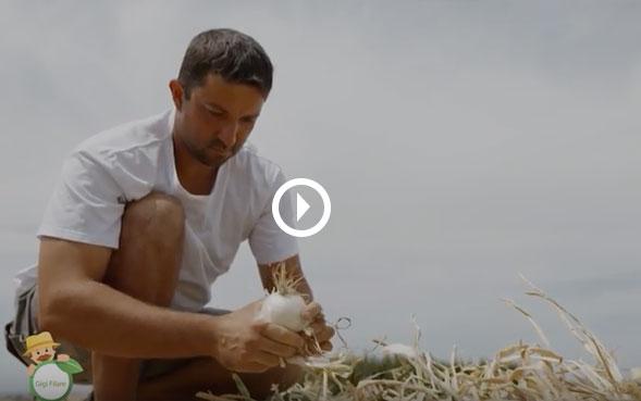 Agricoltore Matteo Pelliconi